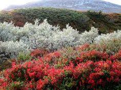 Tundra flora.