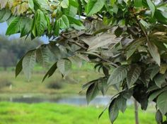 Humedal Jaboque - Descubriendo 7 Tesoros Naturales en Bogotá