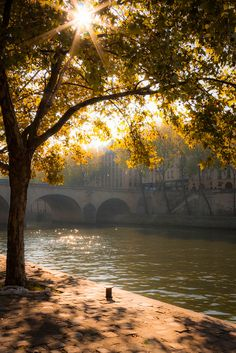 Seine in the morning light.
