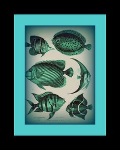 Fish Print-Illustration-altered art