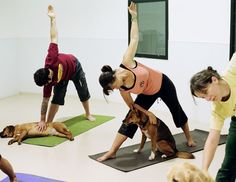 Doga class. I wish I could attend one!