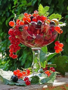 Currants, Grapes and Blueberries