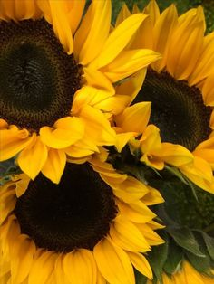 Sunflower Garden, Sunflower Art, Sunflower Fields, Happy Flowers, Fall Flowers, Beautiful Flowers, Sunflower Iphone Wallpaper, Sunflower Pictures, Background Pictures