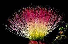 Blume, Exotische, Bunte, Rosa, Gelb -