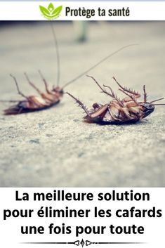 The best solution to eliminate cockroaches once and for all Natural Beauty Tips, Health And Beauty Tips, Beauty Games, Solution, Good Things, How To Plan, Hacks Diy, Diy Ideas, Blog