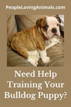 Doggy Dan's Perfect Puppy Program is the best puppy training for your Bulldog puppy. It's effective and affordable. Puppy Training, Dog Training