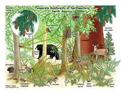Amazon Rainforest Ecosystem