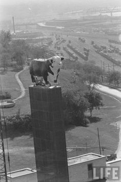 Love the vintage shot of the American Hereford Assn in Kansas City!