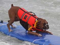 Call me crazy, but I don't see Arlo surfing...EVER.  He has wayyy too much ADHD for that! lol