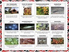 Nga tohu o te Ao Maori Waitangi Day, Water Time, School Plan, School Resources, Teaching Resources, Teaching Aids, Childhood Education, Fresh Water, Herbalism
