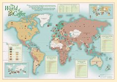 World map showing the production, export, import and consumption of coffee. Bar Drinks, Coffee Drinks, Coffee Aroma, Expensive Coffee, Coffee World, Coffee Facts, How To Order Coffee, Coffee Logo, Coffee Health Benefits