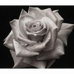 Resultado de imagem para black and grey photography - Tatuering Rose Chest Tattoo, Rose Tattoos, Black Tattoos, Flower Sketch Pencil, Flower Art Drawing, Bleistift Tattoo, Rose Reference, Drawing Reference, Black And Grey Rose