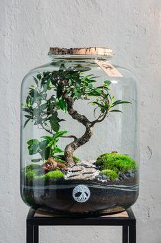 Startseite - Tiny Gardens Terrariums Diy, Terrarium Scene, Bottle Terrarium, Aquarium Terrarium, Terrarium Plants, Bottle Garden, Ficus Microcarpa, Plants In Jars, Indoor Plants Low Light