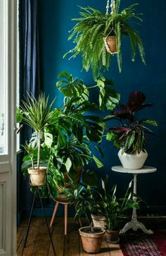 Decorating a plant corner in three steps pflanzen # Room With Plants, House Plants Decor, Hanging Plants, Indoor Plants, Bedroom Plants, Bedroom Decor, Decoration Plante, Interior Plants, Interior Design
