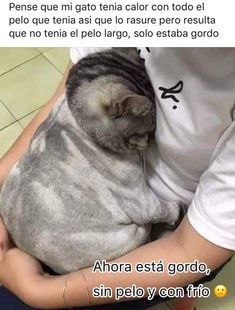 Funny Spanish Memes, Stupid Funny Memes, Funny Animal Pictures, Funny Photos, Stranger Things, Mexican Memes, Meme Faces, Funny Moments, Best Memes