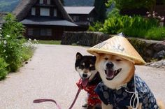 I have to do a Japanese photoshoot with my shiba
