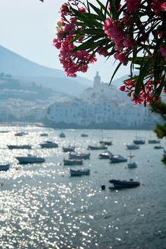 View of Cadaques II | I thought the flowers would make a nice frame  Empordà  Catalonia