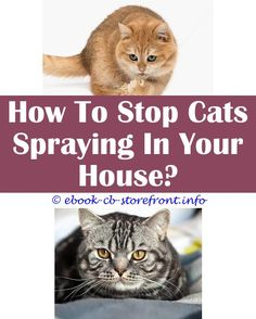 3 Admired Simple Ideas: Cortisone Spray For Cats natural cat spray remover.Lysol Spray Safe Around Cats how to get cat spray smell out.Does Neutering A Cat Stop Him From Spraying.