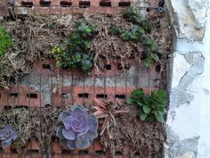 Close up of succulent wall.
