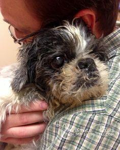 A Rescued Senior Dog