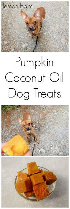 Happy 2nd Birthday Macy! + Pumpkin (cinnamon) Coconut Oil Dog Treats  http://macthelm.blogspot.com/ Three ingredient no-bake dog treats that are chock-full of nutrition!