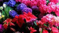 أجمل أنواع الورود في العالم Beautiful Moon Plants Beautiful