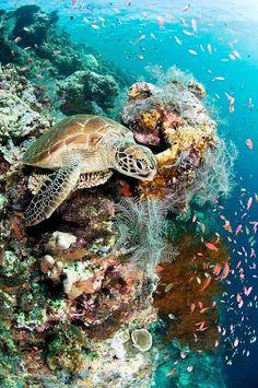 Underwater Wonders - #Seaturtle