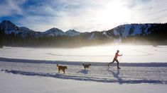 Ski These 8 Essential Nordic Trails - Travel Oregon Nordic Skiing, Oregon Travel, Comfortable Boots, Cross Country Skiing, Outdoor Recreation, Portland Oregon, Trail, Corduroy, Adventure