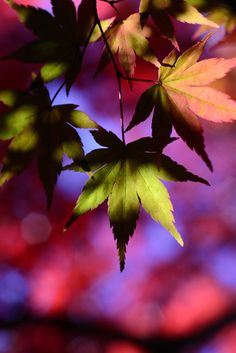If the fall colours of the leaves were year round can you imagine how wonderful and colourful place it would be