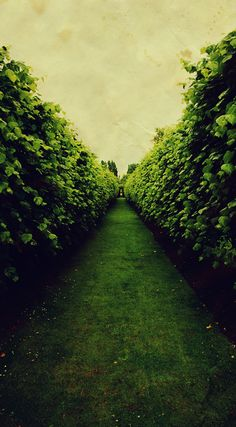 """She went out to the haze in the morning grace, she went out and got lost in a tall hedge maze."""