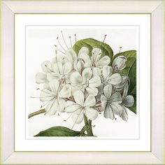 Add a touch of garden-inspired style to the kitchen or entryway with this charming framed print, featuring a vibrant white flower and a classic frame....