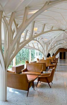 Tree ceilings.