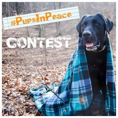 Hey guys! We have teamed up with many shops here on Instagram to bring you a giveaway you don't want to miss. For a chance to win great prizes check out the rules below and enter your best pictures! - Theme: Pups in Peace Whether it be in the comfort of your own home or out somewhere on an adventure there is somewhere your pup can enjoy a peaceful environment. You can post indoor or outdoors photos of your pup(s) enjoying the peace. The photo doesnt need a setting this can be literally…