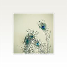 All Eyes Are on You - Peacock Feather Photographic Print, Nature Art £12.00