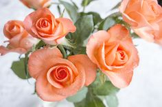 #roses #myphotography #orangerose #rosebuds #roseboquet #rosor #buketter #mittfoto #aprikos #apricot