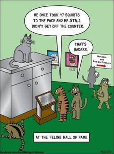 Hilarious Cat Comics To Celebrate Over 20 Years Of Work From Scott Metzger I Love Cats, Crazy Cats, Cool Cats, Funny Cartoons, Funny Cats, Funny Animals, Animal Funnies, Dog Funnies, Animal Memes