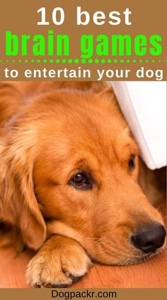 Games For Puppies, Brain Games For Dogs, Dog Games, Brain Training, Dog Training Tips, Training Exercises, Clever Dog, Dog Health Tips, Dog Care Tips