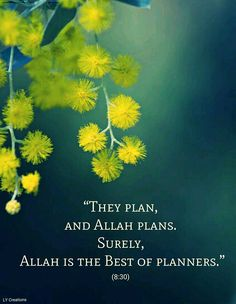 They plan and Allah plans surly Allah is the best of planners