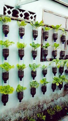 Do you want to grow herbs all year long? You can do it in your garden using hanging garden. Hanging garden is essential in a home, from supply when need herbs for cooking to beautifies your home. All of that can be achieved with hanging garden. Vertical Garden Design, Herb Garden Design, Vegetable Garden Design, Vertical Gardens, Zen Gardens, Wall Gardens, Hanging Gardens, Jardim Vertical Diy, Backyard Vegetable Gardens