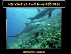This is an original 16 page elementary science lesson on Vertebrates and Invertebrates. The lesson includes:- pre-lesson activities- KWL Chart- Venn Diagram- Post Lesson Quiz- Answer KeyHappy Teaching! Elementary Science, Science Classroom, Teaching Science, Life Science, Elementary Schools, Teaching Resources, Vertebrates And Invertebrates, Science Lesson Plans, Physical Science