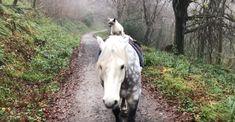 Se Katze Macht Jeden Tag Einen Ausritt Auf Ihrem Lieblingspferd