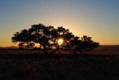 #abendstimmung #africa #afterglow #landscape #namibia #nature #sun #sunset #tree