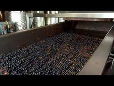 Wine Production in the Napa Valley