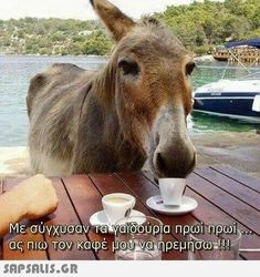 Greek Memes, Funny Greek, Jokes Images, Funny Images, Greek Love Quotes, Good Night, Good Morning, Farm Life, Animals And Pets