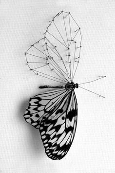 I like how one half of the butterfly is the actual wing, and the other half is just the lines.