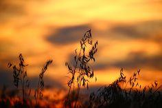 New free stock photo of light landscape field - Stock Photo