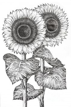 83 best sunflower drawing images on pinterest how to paint