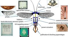 ROBO-BEES Swarms of robotic bees could pollinate the flowers of the future by Lauren Davis / With the bee population in distressing decline, Harvard roboticists have been looking into an ar… Weather And Climate, Drone Technology, Futuristic Technology, Card Companies, Budget, Applied Science, Harvard University, Artificial Intelligence, Insects