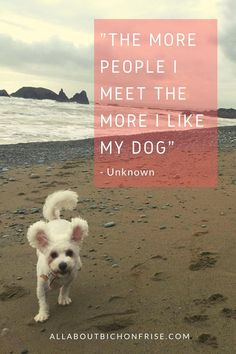 Our dogs are our best friends in the world without a doubt. Show your love and appreciation for these adorable doggos with these 21 inspiring dog quotes. Dog Quotes Inspirational, Great Quotes, Love You More Than, Like Me, John Grogan, Cesar Millan, Little Puppies, Bichon Frise, Inspire Others