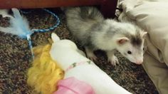 Laissez Ferret ‏@angusmacferret Murphy mauled this unicorn.